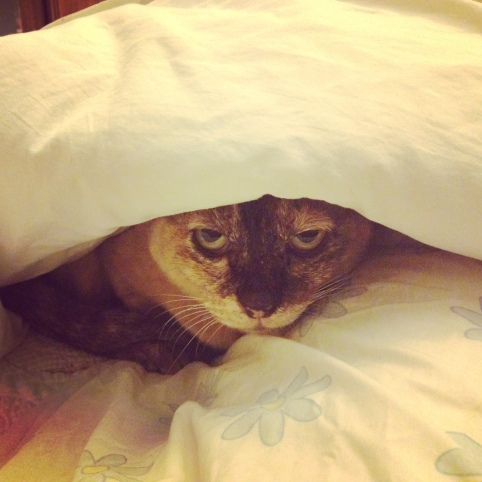 elvira-hiding