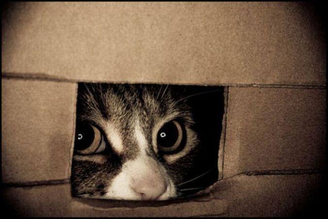 hiding-cats-pics17